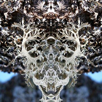 Lichen Entity by crystalline