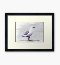 California Gull Acrylic on Paper Framed Print