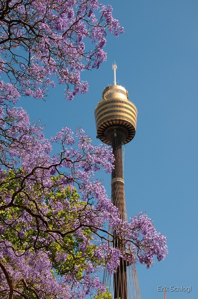 Jacaranda Tower by Erik Schlogl