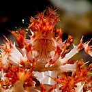 Soft Coral Crab, Papua New Guinea by Erik Schlogl