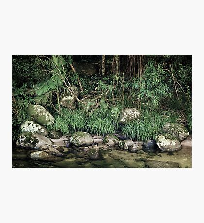 and the rainforest spoke... Photographic Print