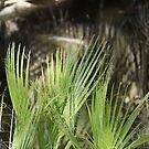 Desert Ferns by Imagery