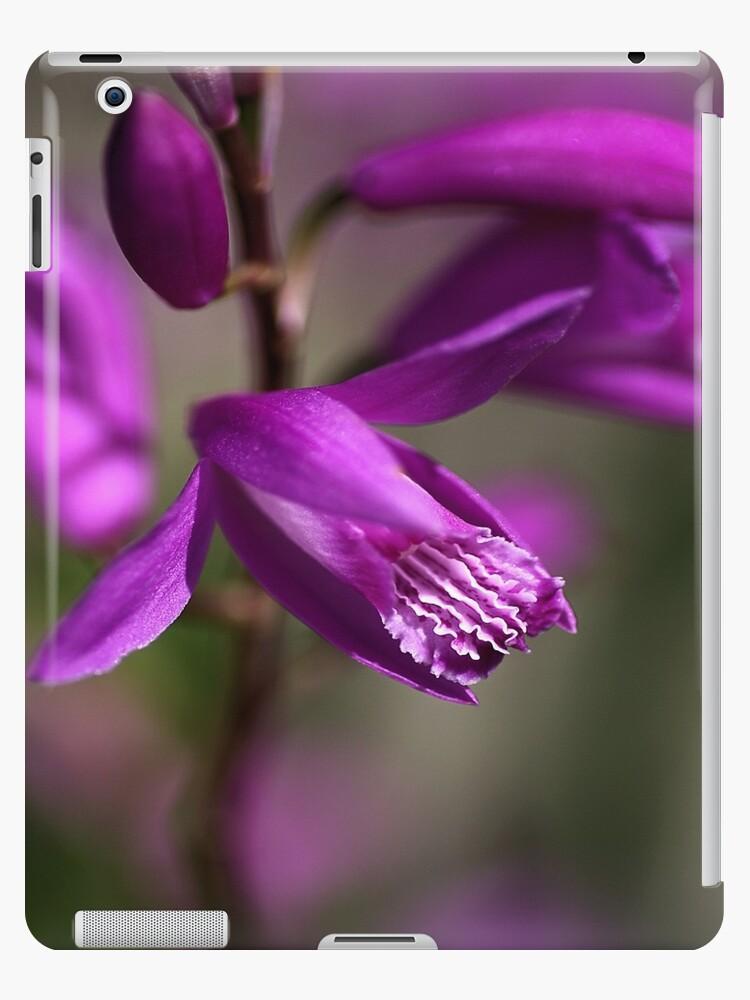 Japanese Orchid by Joy Watson