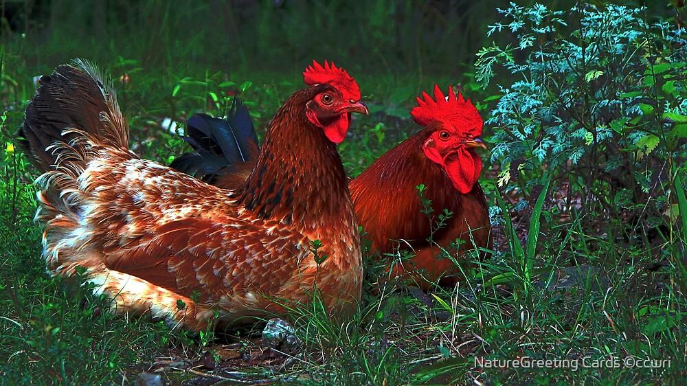 Barnyard Pals  by NatureGreeting Cards ©ccwri