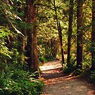 A Walk through the Woods by MaluC