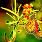 Glorious Monarch Butterfly Abstract by Kay Brewer