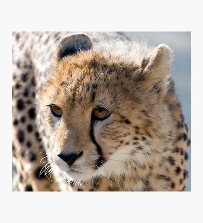 Cheetah Cub Photographic Print