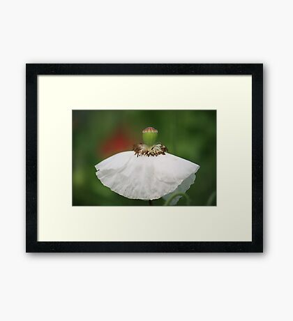 Off to party in my new White Dress... Framed Print