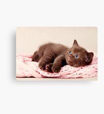 funny furry kitten Canvas Print
