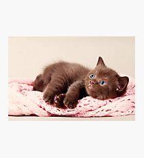 funny furry kitten Photographic Print