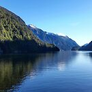 Deep Cove - Doubtful Sound - New Zealand by Kathie Nichols