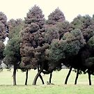 Trees walking in the park, photograph by Vic Potter by Vic Potter