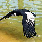 El Condor by Peter Doré
