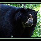 SPECTACLED BEAR II by BOLLA67