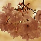 SPRING BLOSSOMS - IN PINK by Teresa Chipperfield