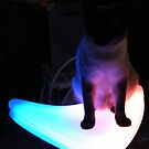 Cat on a Neon Table by raindancerwoman