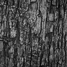Bark VI Monochrome by Lilac Laron