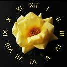 Yellow Rose On Black Yellow Roman Numbers Wall Clock by Alan Harman