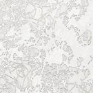 white tangle by Valentina Zampedri