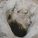Dinosaur Footprint by Susan Russell