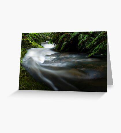 Small stream in the Tangarakau Gorge Greeting Card