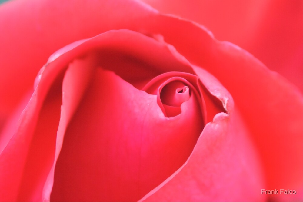 Pink Rose by Frank Falco