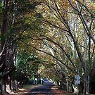 Autumn Road by Bryan Freeman