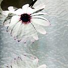 Flower Art by webgrrl
