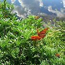 Gulf Fritillary at Water's Edge by May Lattanzio