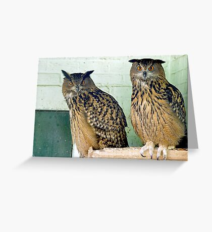 We don't like photographers Greeting Card
