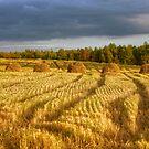 Field by Mikhail Kovalev