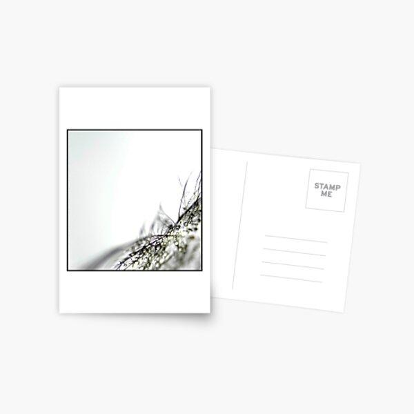 The Gift Postcard