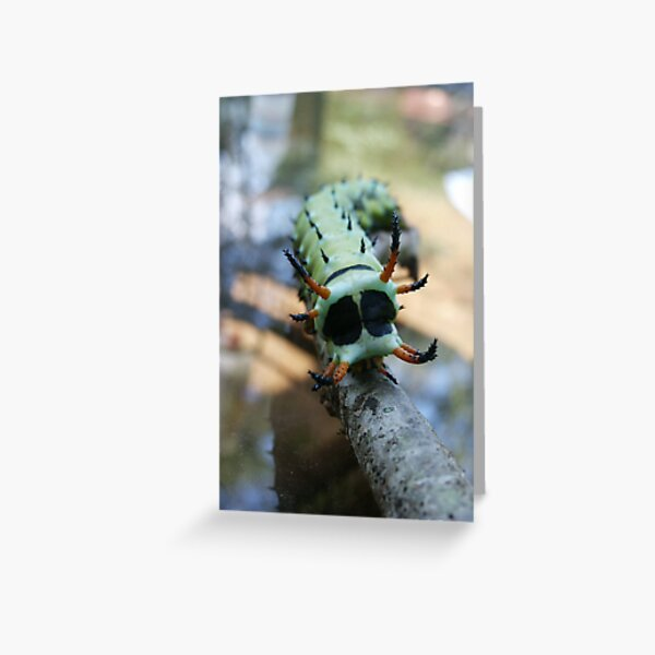 Hickory Horned Devil Caterpillar Greeting Card By Chstudios Redbubble