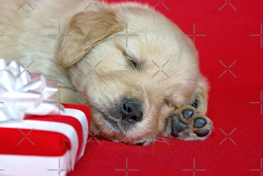 Golden Retriever Holiday by Maria Dryfhout