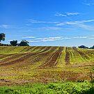 Rolling Fields Norfolk UK by Mark Snelling