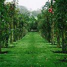 Rose Garden in Ardgillan Park  by Martina Fagan