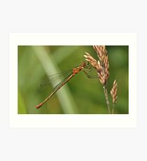 Common Spreadwing Art Print