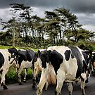 traffic jam ... NI style ! by SNAPPYDAVE