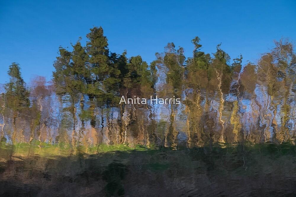 Reflection by Anita Harris