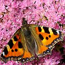 Mmm... Nectar by Michael Hadfield