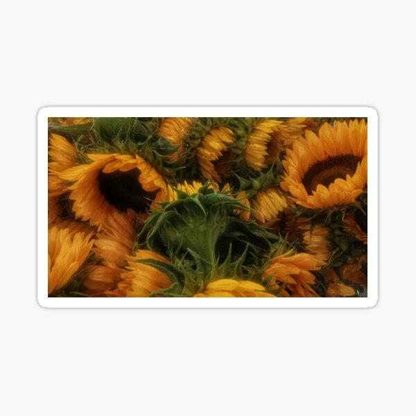 Bunch of Sunflowers Sticker