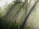 """Casting Shadows"" by debsphotos"