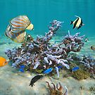 Colorful tropical fishes with coral Pacific ocean by Dam - www.seaphotoart.com