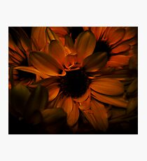 Soft Flower Glow Photographic Print