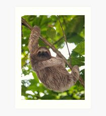 A young three-toed sloth animal in the jungle Art Print