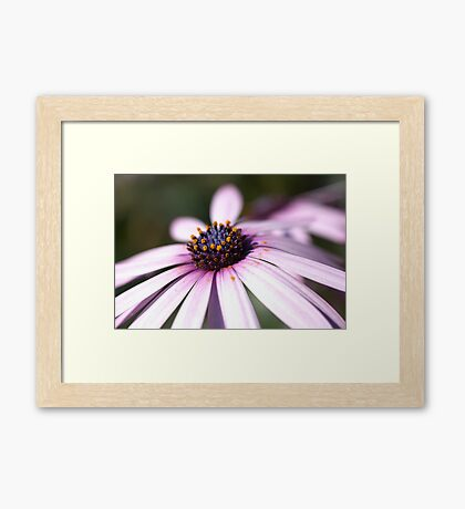 Daisy Time Framed Print