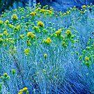 Wüsten-Berg-wildes Blumenfoto von shethatisnau