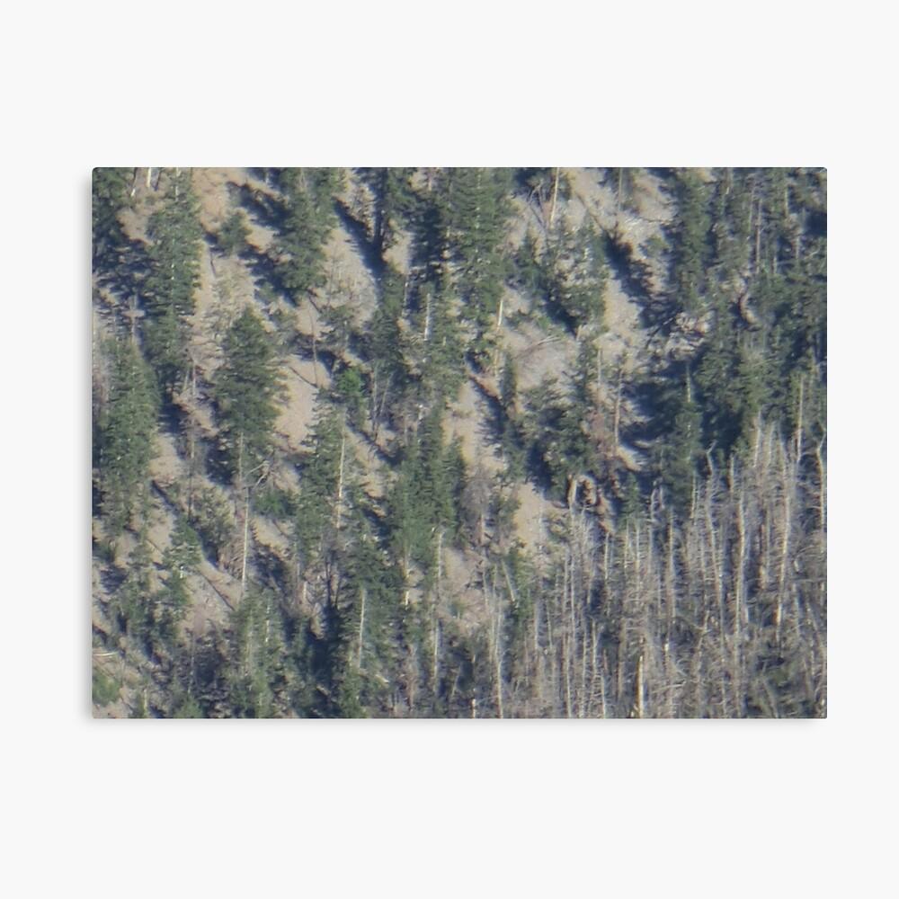 Frühlingsgebirgs-Waldlandschaft Leinwanddruck