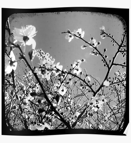 Plum Blossoms Through The Viewfinder (TTV) Poster
