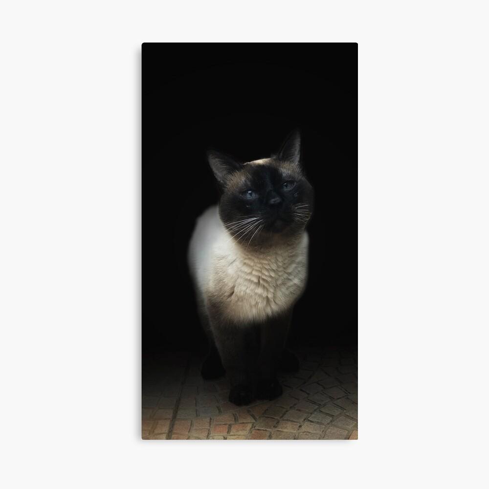 gato siames Lienzo